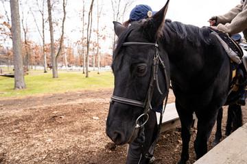 写真素材: 牧場 馬
