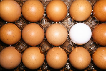 Fourteen brown and one white egg in a transparent plastic box. The image in the background from the top. Flat lay horizontally.