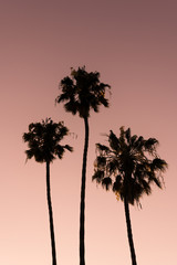 three palm trees stand above red sunset sky