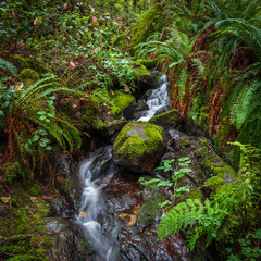 Fototapete - Small mountain creek in Vancouver, Canada. Long exposure water flow.