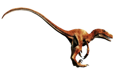 Deinonychus is a theropod dinosaur, a cousin of velociraptor, that lived during the Cretaceous. Here depicted with no feathers on a White Background. 3D Rendering