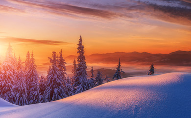 Photo sur Toile Orange eclat Amazing sunrise in the mountains. Sunset winter landscape with snow-covered pine trees in violet and pink colors. Fantastic colorful Scene with picturesque dramatic sky. Christmas wintery Background