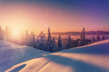 Aluminium Prints Salmon Wonderful picturesque Scene. Awesome Winter landscape with colorful sky. Incredible view of Snow-cowered trees, glowing sunlit, during sunset. Amazing wintry background. Fantastic Christmas Scene.