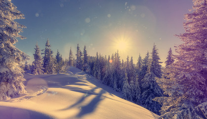 Splendid Alpine scenery in winter. Fantastic frosty morning in forest. snow-cowered pine trees under warm sunlight. Fantastic mountain highland.  Amazing winter background. Wonderful Christmas Scene