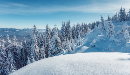 Winter background of snow and frost Fantastic winter forest landscape during sunset. Icy snowy fir trees glowin in sunlight. winter holiday concept. wonderland in winter. Christmas Holiday Concept.