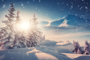 Magic Winter Landscape. Awesome alpine highlands in fog. Panoramic view of winter fairy-tale frosen trees and Majestic mountain rock on the background. in the Alps in misty evening at sunset.