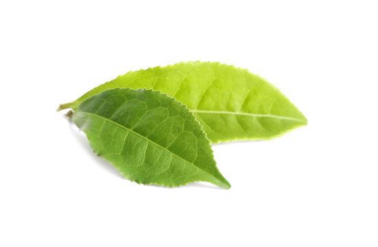 Fresh green tea leaves isolated on white