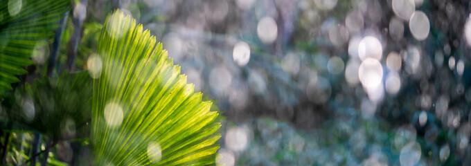 Obraz Tropical palm leaf in a rain shower in wet season - fototapety do salonu