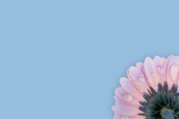 waterdrops on gerbera flower with copy space