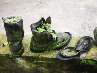 Upcycle old things creatively! Succulent plants and moss and trendy succulent plants growing in pair of upcycled old leather boots in alternative garden. Space for your text.
