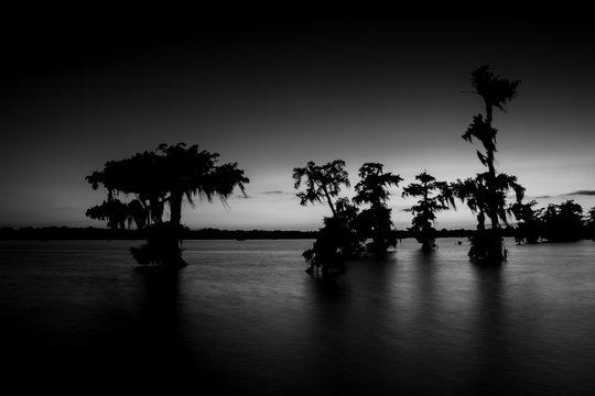 Black and White lake swamp cypress trees sunset