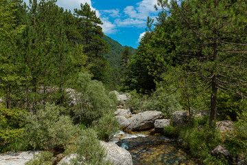 Keuken foto achterwand Bos rivier Creek flowing between stones and trees. The stream is located on Mount Olympus on the way to the Holy Cave.