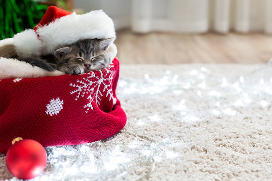 Christmas cat wearing Santa Claus hat sleeping on plaid under christmas tree with blurry festive decor. Adorable little tabby kitten, kitty, cat. Cozy home. Animal, pet, cat. Close up, copy space.