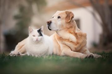 gato y perro Fotobehang