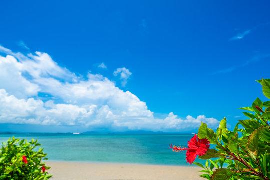 ハイビスカスと沖縄の海