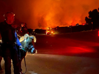 John Malone and a miniature horse observe the Cave fire in Los Padres National Forest near East Camino Cielo