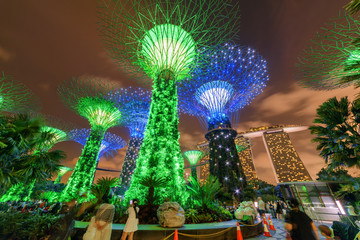 Awesome night bottom view of the Supertrees in Singapore
