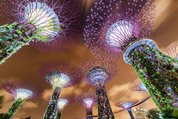 Fantastic night bottom view of the Supertrees and the Skyway