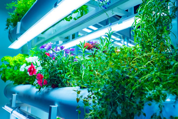 Growing plants for laboratory purposes. Study of plants. Providing light for plant growth. Lamp shines on the flowers. Biotechnology. Phyto laboratory. Science. Growing medicinal plants.