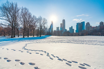 Fototapete - Central park at sunny winter day, New York City, USA