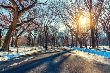 Fototapete - The mall in central park at sunny winter day, New York City, USA