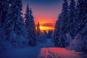 Spoed Fotobehang Nachtblauw Cold winter day sunset landscape with snowy trees. Photo from Sotkamo, Finland. Background Heavy snow view.