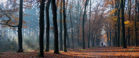 Fototapeten Straße im Wald mother and child walk the dog in autumnal forest near zeist in the netherlands
