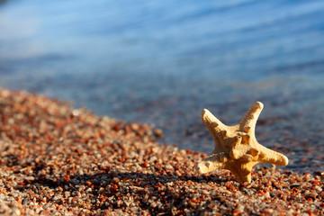 Starfish On The Sunny Summer Beach