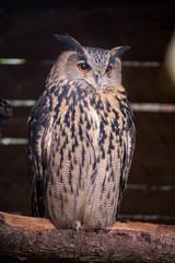 UHU Night active forest animal