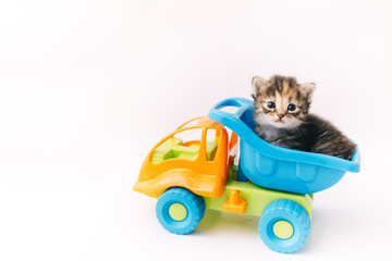 Kitten sitting inside blue toy truck car on white background