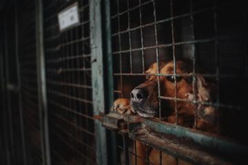 Fototapeta sad animal shelter dog behind bars in a cage obraz