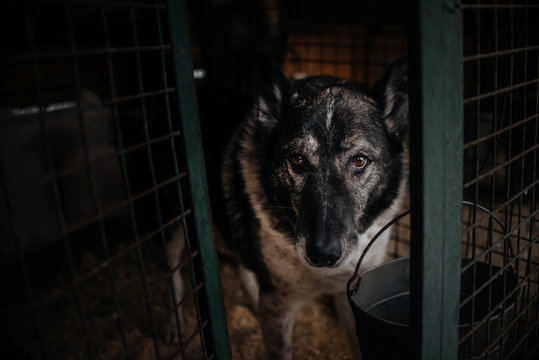 old dog posing in animal shelter cage, waiting for adoption