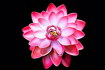 Pink Lotus water lily flower isolated on black background