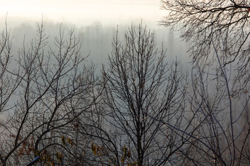 Bare tree branches in the fog at dawn