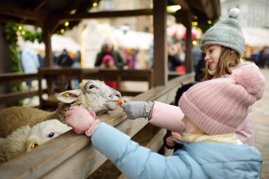 Two cute young sisters having fun feeding sheep in a small petting zoo on traditional Christmas market in Riga, Latvia. Happy winter activities for kids.