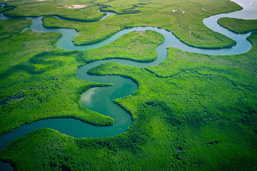 Foto op Aluminium Aap Gambia Mangroves. Aerial view of mangrove forest in Gambia. Photo made by drone from above. Africa Natural Landscape.