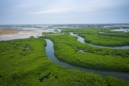 Senegal Mangroves. Aerial view of mangrove forest in the  Saloum Delta National Park, Joal Fadiout, Senegal. Photo made by drone from above. Africa Natural Landscape.