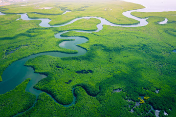 Papiers peints Rivière de la forêt Gambia Mangroves. Aerial view of mangrove forest in Gambia. Photo made by drone from above. Africa Natural Landscape.