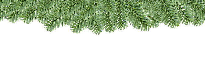 Christmas evergreen fir tree border, isolated on white background