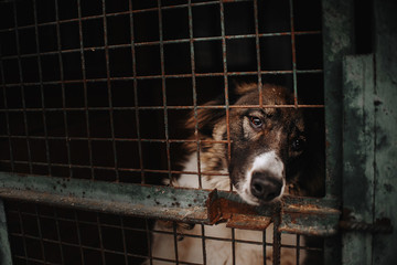 sad dog posing behind bars in an animal shelter