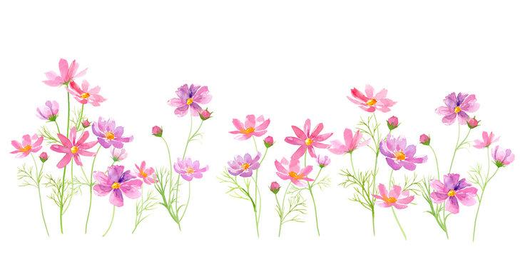 コスモスの花の咲く道、水彩イラスト