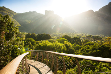 Sunset shining over a boardwalk in Kirstenbosch Botanical Garden, Cape Town, South Africa