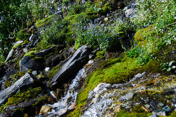 Mountain stream on summer day. Thin stream of river among moss, grass and stones