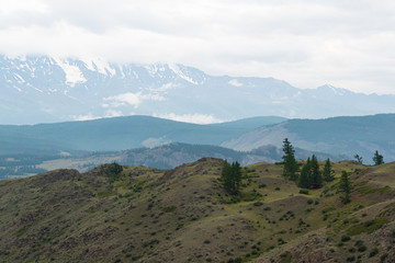 Pine grove in mountain valley. Ridge of rocks on horizon under clouds, Hiking in steppes