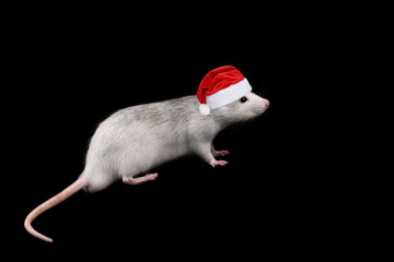 Rat full length in santa claus hat isolated on dark background.