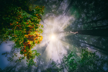 Low angle view of sun through the trees, Switzerland