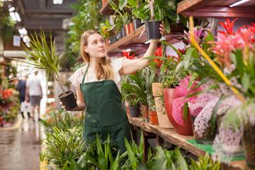 Portrait of skilled woman florist arranging flowers in pots at flower shop