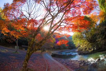 Poster de jardin Melon 龍門の滝の紅葉
