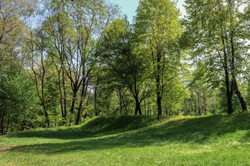 green grassy lawn on a hump in the park. wonderful sunny weather in springtime