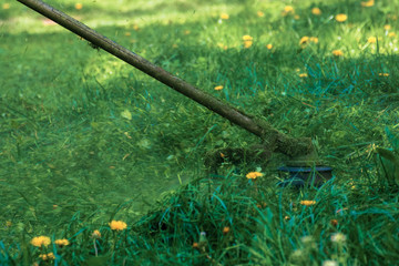 professional grass mowing in the park. green lawn with yellow dandelions. close up shot of gasoline brush cutter head with nylon line trimming fresh grass to small pieces. side view of back lit scene